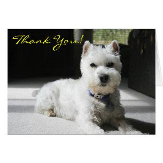 Thank You, Blank, Mini Schnauzer Card