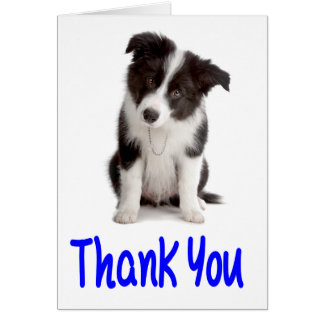Thank You Border Collie Puppy Blank Note Card