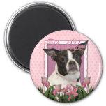 Thank You - Boston & Rat Terrier - Jazy Magnets