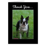 Thank You Boston Terrier greeting card