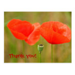 Thank you - Bright Red Poppies Post Cards