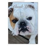 Thank you bulldog greeting card