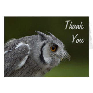 Thank You Card - Baby Grey Owl