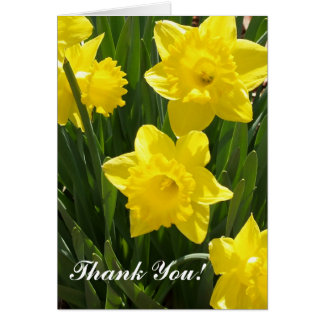 Thank You Card Daffodils