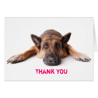 Thank You Card German Shepherd Dog
