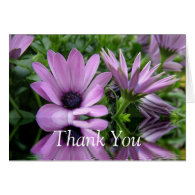 thank you card,purple daisy flowers greeting cards