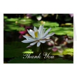 Thank You Cards - Water Lily on Pond