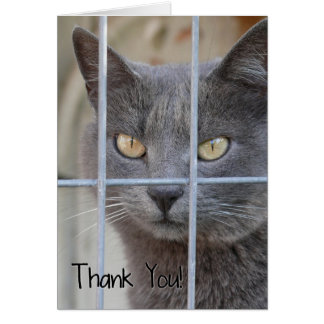 Thank You! Cat Greeting Card