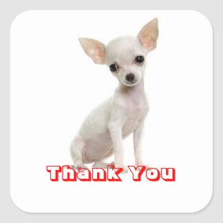 Thank You Chihuahua Puppy Dog Greeting Stickers