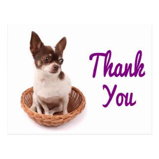 Thank You Chihuahua Puppy Dog Postcard