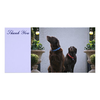 Thank You, Chocolate Labs Card