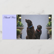 Thank You, Chocolate Labs Thank You Card