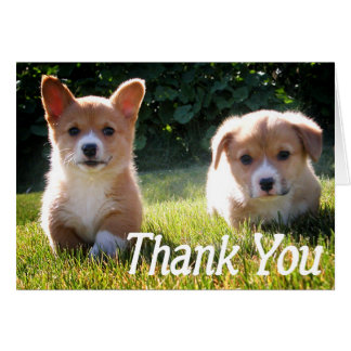 Thank You Corgie ( Pembroke ) Puppy Dog Note Card