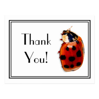 Thank You Cute And Classy Little Ladybug Postcard