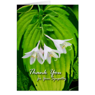 Thank You for Sympathy, Hosta Blooms Greeting Card
