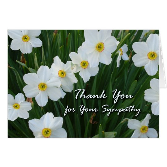 Thank You for Sympathy, Narcissus Flowers Card