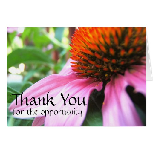 thank you for the opportunity  purple coneflower card