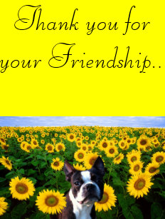 Thank You For Your Friendship Invitations Stationery Zazzle