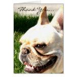 Thank you French bulldog greeting card