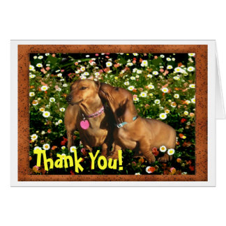Thank You! From one Dachshund to another.......... Card