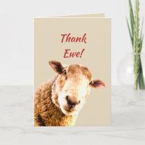 Thank You Funny Sheep Animal Humor