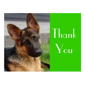 Thank You German Shepherd Puppy Dog Post Card