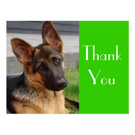 thank you german shepherd puppy dog post card zazzlecom