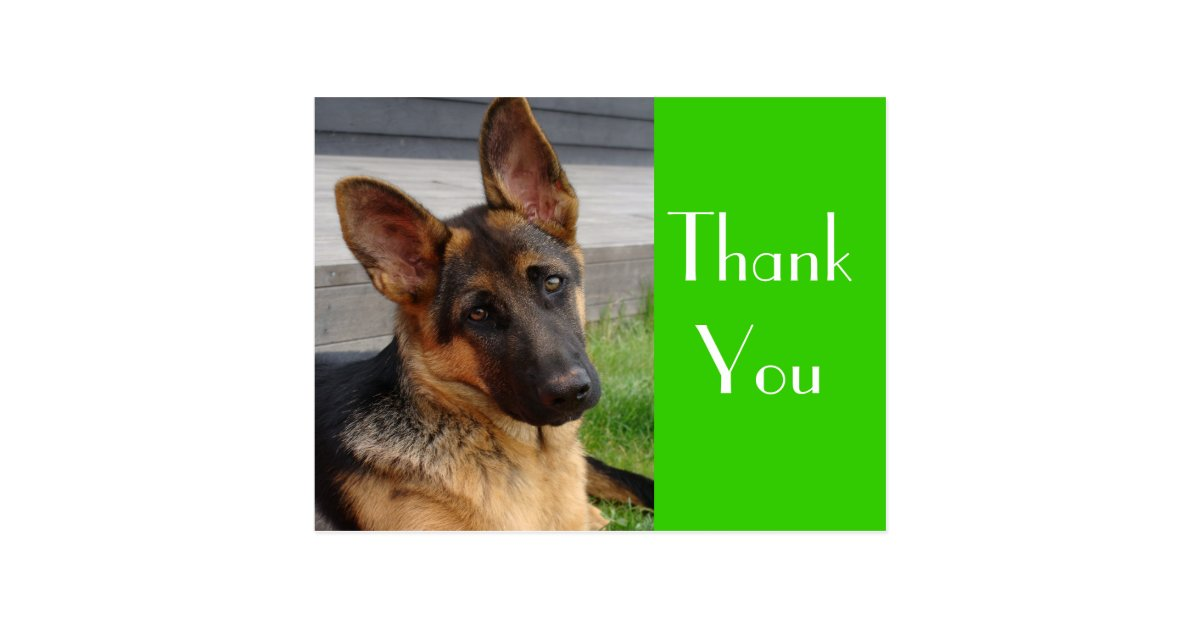 Thank You German Shepherd Puppy Dog Post Card | Zazzle