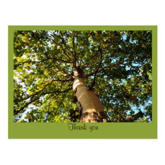 Thank you - green tree postcard