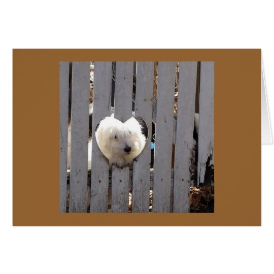 Thank You -  Havanese Puppy Card