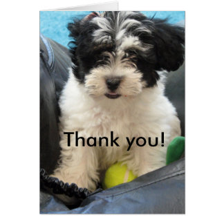 Thank you! Havanese Puppy Greeting Card
