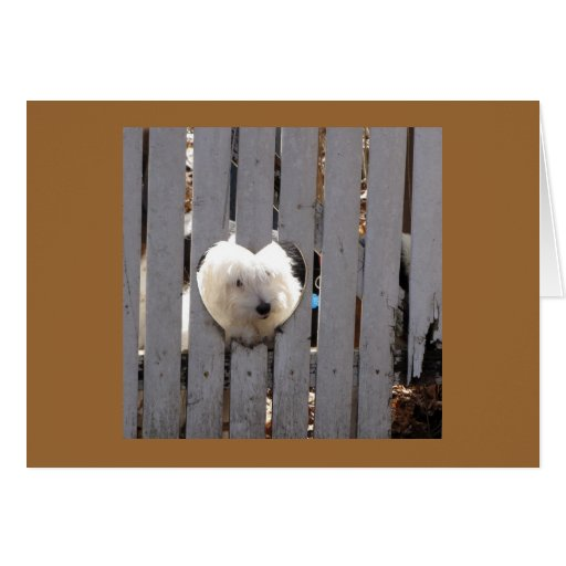 Thank You -  Havanese Puppy Greeting Cards