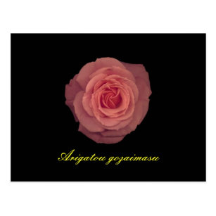 Thank-you in Japanese on Pink Rose Postcard