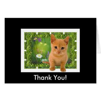 Thank you Kitten Card