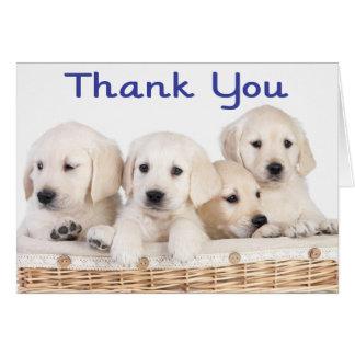 Thank You Labrador Retriever Puppy Dogs Card