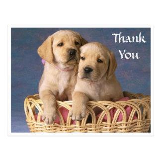 Thank  You Labrador Retriever Puppy  Post Card