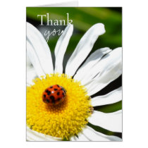 Thank you Ladybug Card