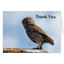 Thank You Little Owl Card