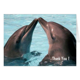Thank You, Lovely Dolphins - Note Card