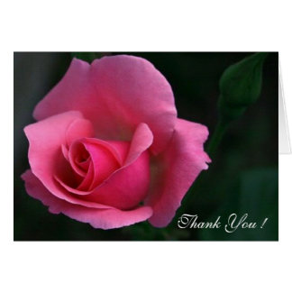 Thank You,  Lovely Pink Rose -  Note Card
