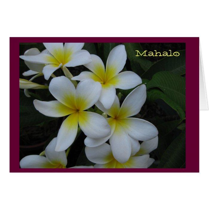 Thank you (Mahalo) card - white plumeria cascade