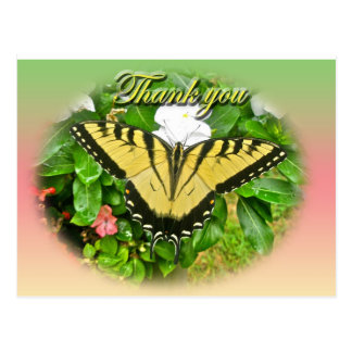 Thank You Male Tiger Swallowtail Butterfly Items Postcard
