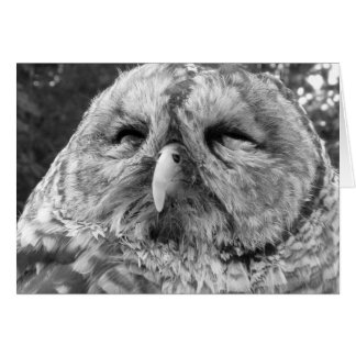 Thank You Note Card ~ Barred Owl Card