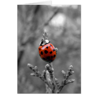 Thank You Note Card ~ Ladybug