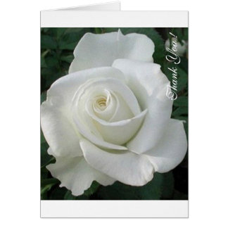 Thank You, Note Card - White Lovely Rose