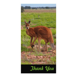 Thank You photo card - Australian red kangaroo