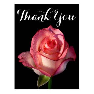 Thank You Pink Rose Flower Black Floral Postcard