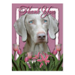 Thank You - Pink Tulips - Weimeraner - Blue Eyes Post Cards