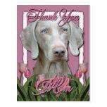 Thank You - Pink Tulips - Weimeraner - Blue Eyes Postcards