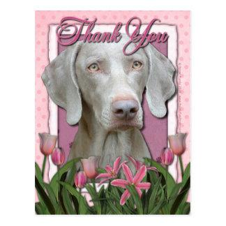 Thank You - Pink Tulips - Weimeraner - Golden Eyes Post Cards